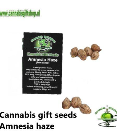 Cannabis gift seeds Amnesia haze