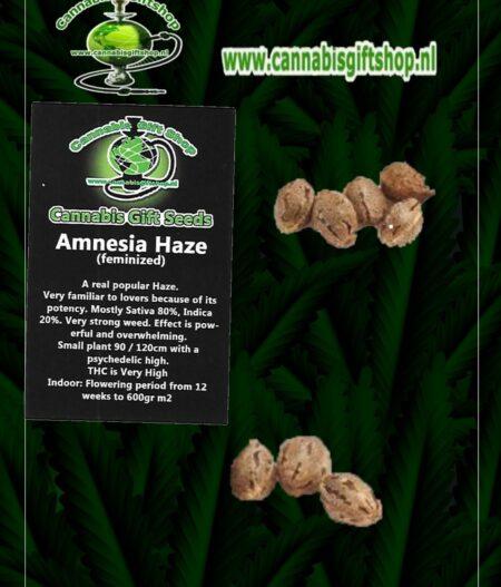 Cannabis giftshop Amensia