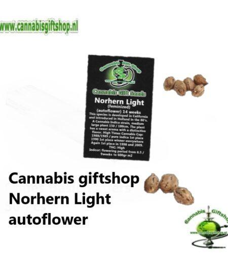 Cannabis giftshop Norhern Light autoflower