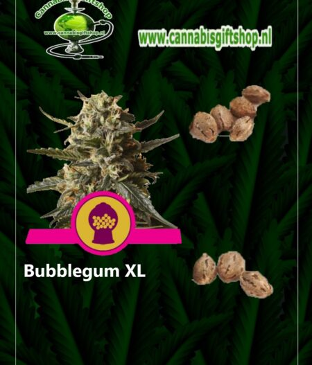 Cannabis giftshop Bubblegum XL