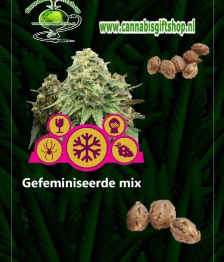 Cannabis giftshop Gefeminiseerde mix