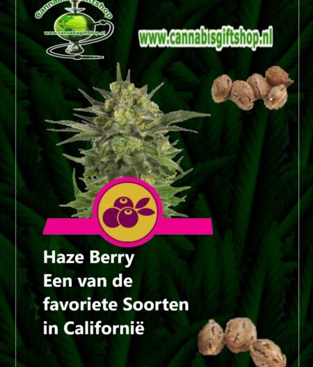 Cannabis giftshop Haze berry