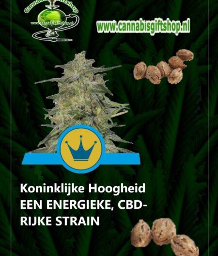 Cannabis giftshop Koninklijke Hoogheid