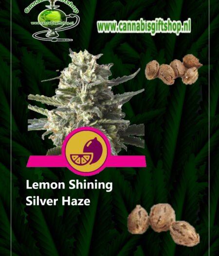 Cannabis giftshop Lemon Shining Silver Haze