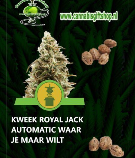 Cannabis giftshop ROYAL JACK AUTOMATIC