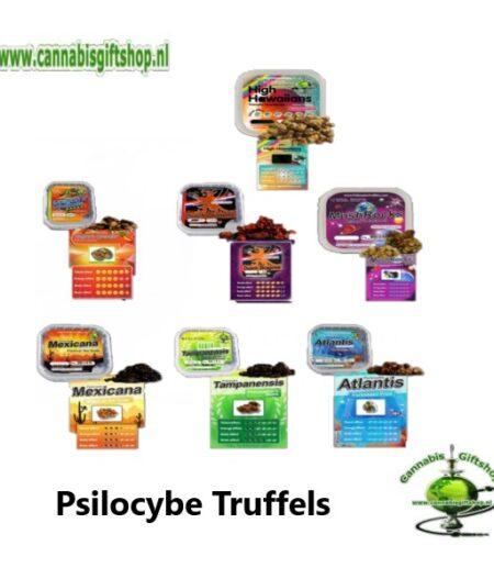 Psilocybe Truffels