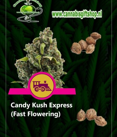 cannabis giftshop Candy Kush Express (Fast Flowering)