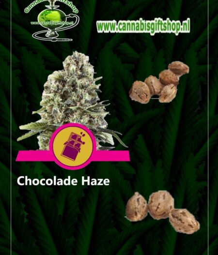cannabis giftshop Chocolade Haze