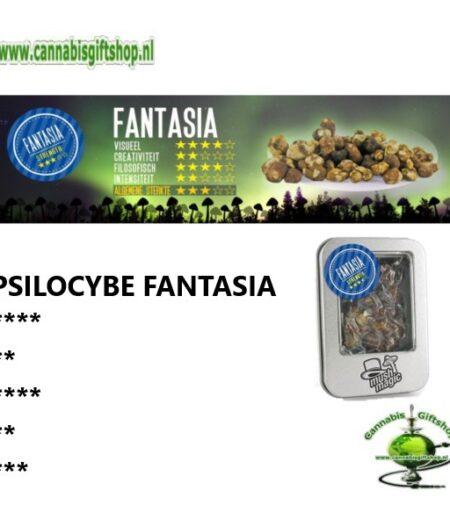 Psilocybe Fantasia