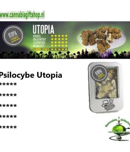 Psilocybe Utopia
