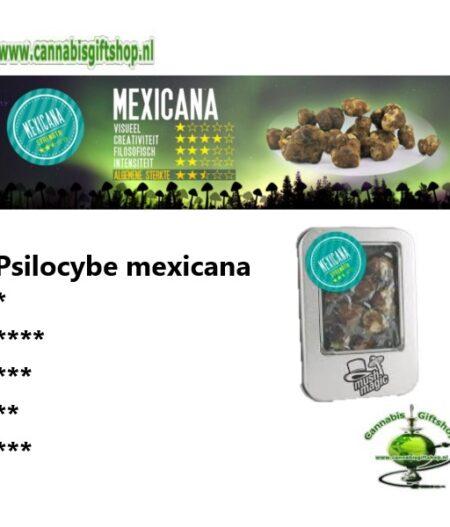 Psilocybe mexicana