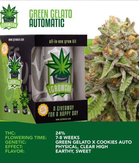 Igrowcan - Green Gelato Automatic